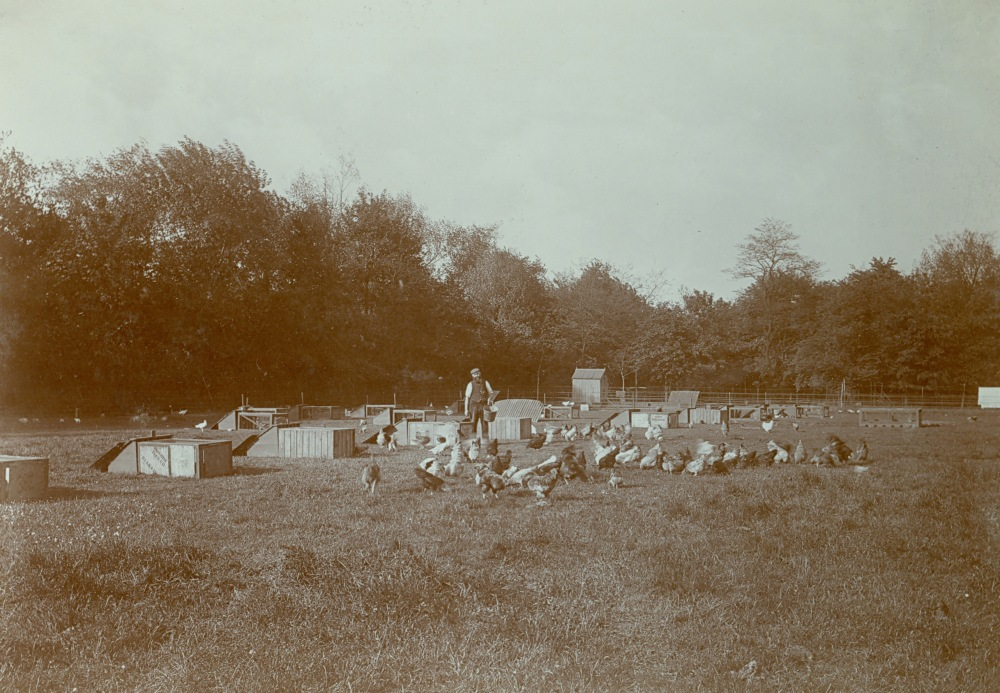 Normansfield: The Early Years 1868 to 1913. Part 2 Mental Deficiency & Treatment at Normansfield (2/2)
